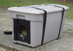 Shelters jacksonville feral cat support site for Hard plastic dog house